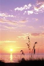 Preview iPhone wallpaper Sea, sunset, grass, Venice Beach, Florida, USA