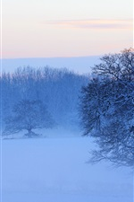 Preview iPhone wallpaper Snow covered trees, mist, dusk, winter, France