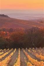 Pôr do sol, anoitecer, vinha, Siena, Toscana, Itália