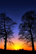 Sunset, trees, glow, silhouette