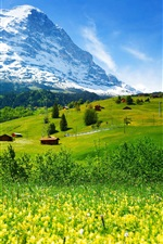 Preview iPhone wallpaper Switzerland, mountains, glacier valley, grass, wildflowers, house