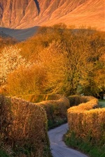 Preview iPhone wallpaper Trees, road, mountains, Brecon Beacons, Wales, UK