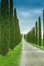 Preview iPhone wallpaper Tuscany, Italy, road, grass, cypress