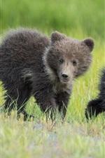 Zwei Bären, junge, Kinder, Gras