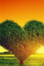 Two love hearts trees, grass, sunset