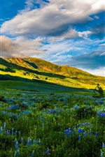 Preview iPhone wallpaper USA, Colorado, beautiful nature, mountains, meadows, flowers