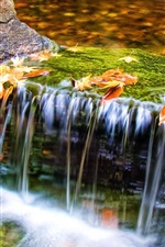 Autumn nature, stream, water, leaves