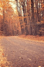 Autumn, trees, red leaves, road