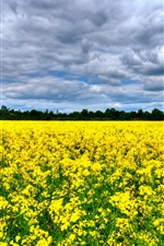 Preview iPhone wallpaper Beautiful canola flowers field, trees, clouds