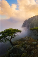 Preview iPhone wallpaper Beautiful morning in mountain top, clouds, flowers, trees, rocks, fog