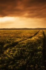 Preview iPhone wallpaper Beautiful wheat fields at evening, clouds