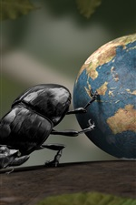 Beetle move the earth, creative pictures