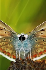 Preview iPhone wallpaper Butterfly macro photography, wings
