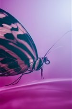 Preview iPhone wallpaper Butterfly, wings, insect, purple background