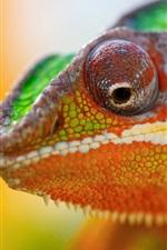 Chameleon head close-up, bokeh