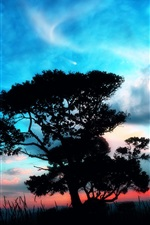 Preview iPhone wallpaper Come with me, lovers, beautiful fantasy world, trees, planet, clouds