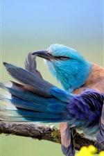 Preview iPhone wallpaper Coracias Garrulus, blue feather bird