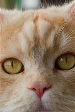 Preview iPhone wallpaper Cute cat face close-up, yellow eyes