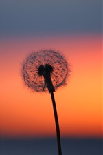 Preview iPhone wallpaper Dandelion flower at sunset, red sky