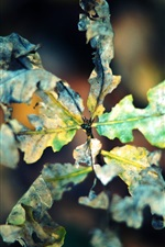 Preview iPhone wallpaper Dry leaf macro photography, autumn, bokeh