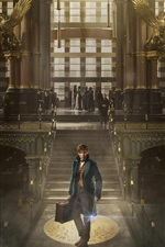 Preview iPhone wallpaper Fantastic Beasts and Where to Find Them