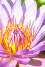 Preview iPhone wallpaper Flower macro photography, water lily, pink petals