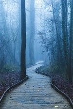 Preview iPhone wallpaper Footpath, trees, forest, fog, dawn