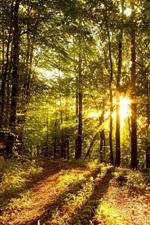 미리보기 iPhone 배경 화면 아침, 나무, 태양 광선의 숲
