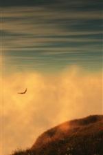 Relva, nascer do sol, montanha, céu, nuvens, voando gaivotas