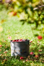 Preview iPhone wallpaper Harvest fruit, apples, bucket, summer, lawn, tree