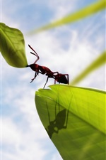 Preview iPhone wallpaper Insect ants, green leaves, clouds, blue sky
