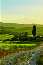 Preview iPhone wallpaper Italy, Tuscany, beautiful landscape, fields, road, grass, trees, house