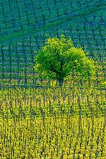 Preview iPhone wallpaper Kientzheim Vineyards, France