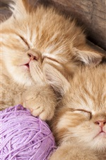 Preview iPhone wallpaper Kittens sleeping, yarn balls