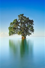 Preview iPhone wallpaper Lake, lonely tree, blue sky