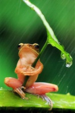 Preview iPhone wallpaper Lonely frog, rain, leaf, water drops