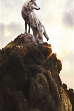 Preview iPhone wallpaper Lonely wolf on stones mountain top