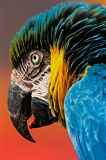 Preview iPhone wallpaper Macaw, parrot, bird close-up, beak, blue feathers