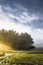 Preview iPhone wallpaper Morning nature scenery, fields, sunlight, trees, clouds, fog