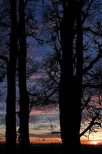 Preview iPhone wallpaper Night, clouds, sunset, trees silhouette