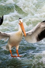 Preview iPhone wallpaper Pelican, wings, bird close-up, water waves
