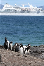 Preview iPhone wallpaper Penguin, coast, sea, ship