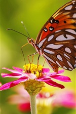 Preview iPhone wallpaper Pink flowers, butterfly, insect, bokeh