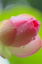 Preview iPhone wallpaper Pink lotus flower bud close-up, dew