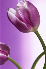 Preview iPhone wallpaper Purple tulips close-up, flowers, bokeh