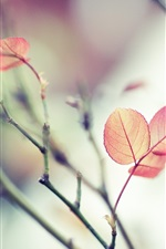Preview iPhone wallpaper Red leaves, branches, soft focus