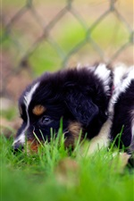 Preview iPhone wallpaper Sadness dog in grass, fence