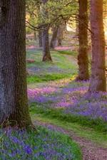 Escócia bonitas da natureza, floresta, árvores, grama, flores, manhã, raios do sol