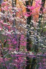 Shenandoah National Park, flowers, trees, Virginia, USA