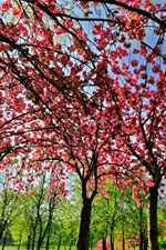 Spring tree flowers, pink, bloom, green grass